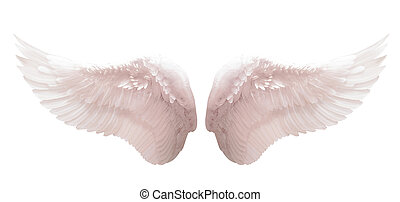 White angel wing isolated - White angel wing in black color...