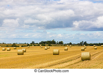 Round bales of hay spread out on Irish farmland