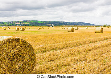 Bales of hay on farm land - Round bales of hay spread over...