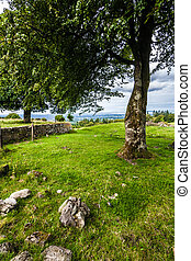 Beautiful tree in an Idyllic landscape in Ireland where...