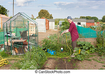 Woman working in an allotment in a suburb in Dublin Ireland