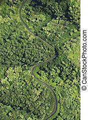 森林, によって, 道