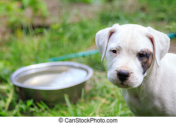 Hungry dog with a sad face, a bowl of water in the...