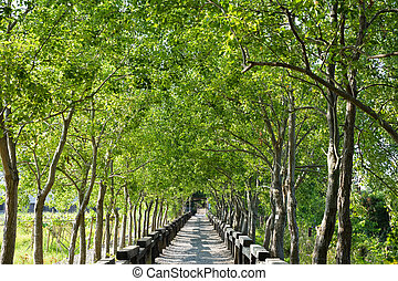 Tree lined rural lane