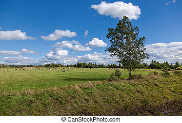 Summer landscape with grazing cows on pasture