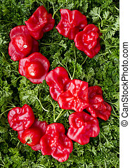 Letter S Pepper and parsley