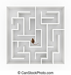 Mouse in maze - Top view of a tiny mouse (mus musculus)...