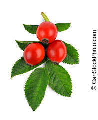 Rose hips (Rosa canina),close-up