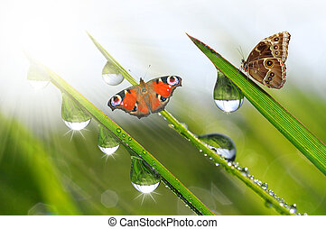 dew with butterflies - fresh morning dew with butterflies