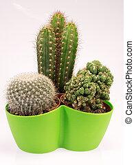 succulent cactus plants in a green vase - succulent cactus...