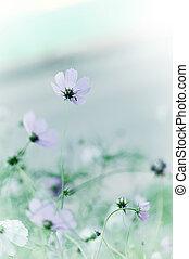 Beautiful defocus blur tender pastel flowers