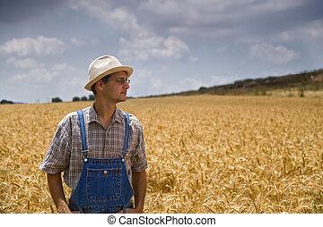 farmer in a wheat field - farmer standing in a wheat field