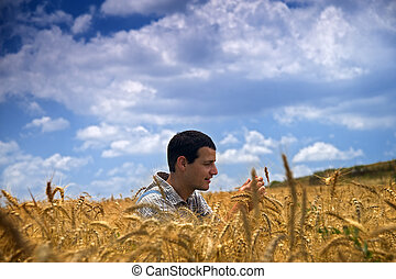 farmer in a wheat field - farmer in a wheat field cheking...