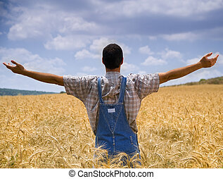 granjero, trigo, campo, brazos, extensión, afuera