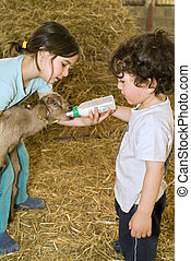 boy and girl feeding bay goat with baby bottle in a farm