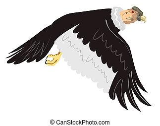 condor, Volo