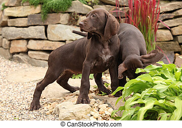 Adorable puppies in the garden - Adorable puppies of...