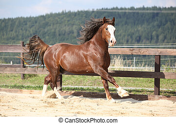 Beautiful stalion with long mane running on the sand