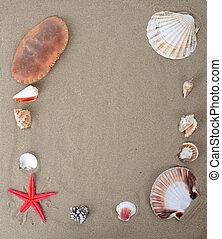 beach sand and shells - beach sand framed with sea creachers