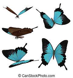 3d blue butterflies - Digital render of blue butterflies on...