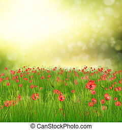 Field of poppy flowers - Spring background with 3d fresh...
