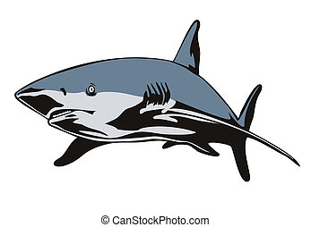 Shark Swimming Front View - Illustration of shark swimming...