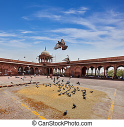 Pigeons in Jama Masjid mosque - Pigeons in Jama Masjid - the...