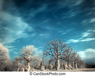 Infrared landscape - Infrared picture of trees in...