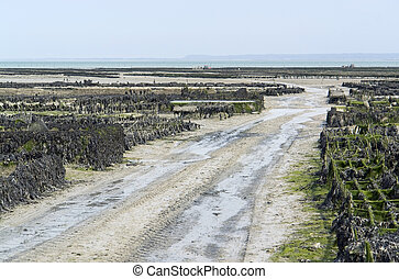 oyster beds at Cancale - lots of oyster beds at a town in...