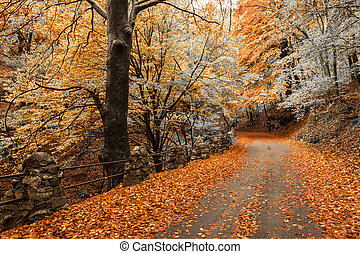 Autumn colors in the forest - autumn season, colors and...