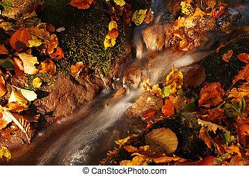 differente, colorito, molti, Foglie, incorniciato, autunno, colori, fiume