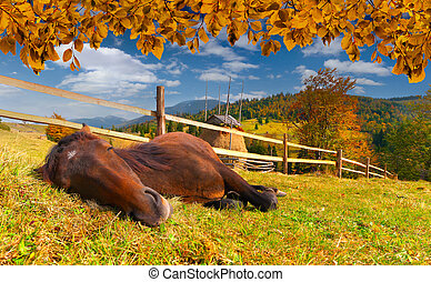 Sleeping horse in the autumn meadow
