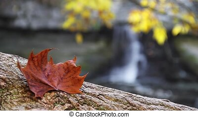 Fall Foliage and Waterfall Loop