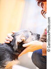 Animals at home female hand patting dog pet head - Animals...