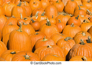 Autumn pumpkins - Group of pumpkins at produce market