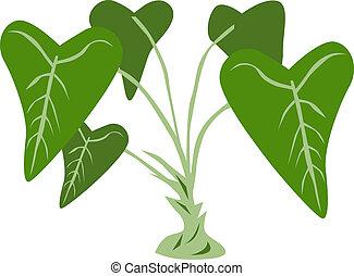 植物, 芋頭