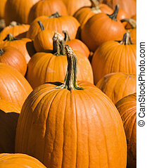 Autumn harvest - Fall pumpkins at outdoor market