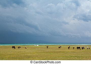 Horses under rain clouds at the lake Song Kul, Tien Shan,...