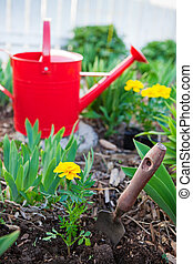 Planting Annuals - An annual marigold freshly planted in a...