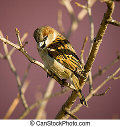 Sparrow on a branch of a tree against a house wall