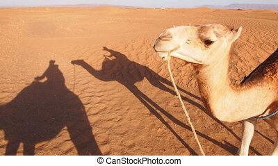 Camel Ride, Morocco - Riding Camels on Zagora Desert in...
