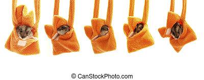 Hamster in a handbag. Set