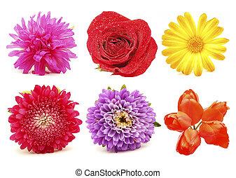 Flowers. Set