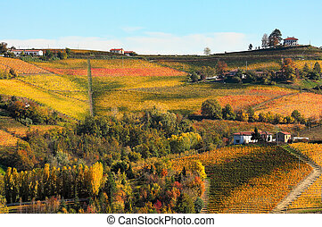 Vineyards on the hills in autumn in Italy - View of colorful...