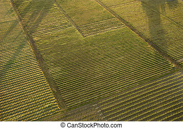 Aerial of crops. - Aerial of agricultural cropland.