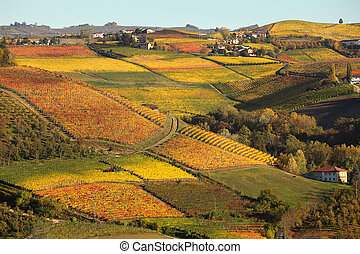 Vineyards on the hills in autumn in Piedmont, Italy - View...