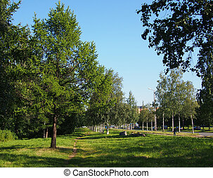 Park in the summer
