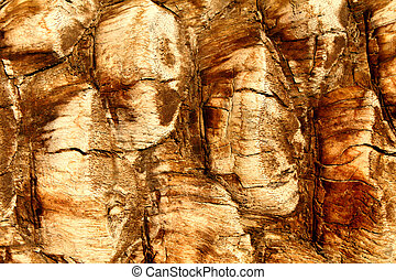 Palm Tree Bark Background - Background of palm tree bark in...
