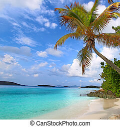 Saint John US Virgin Islands - Palm tree over the beach of...