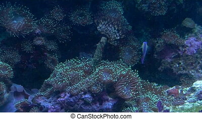 cay - view of the coral reef